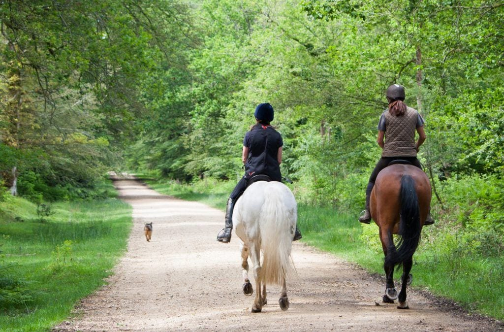 New Forest Horseriding